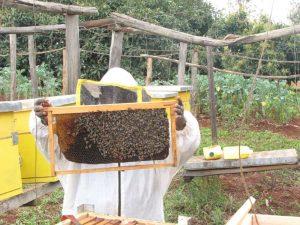 L'Apiculture kenyane en mutation