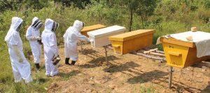 Ferme apicole pédagogique de Kamegeli